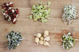 các loại rau mầm